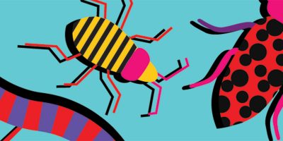 robaki-niebieski-obroza-dla-psa-smycz-szelki-hauever